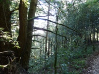 Purisma_Creek_Redwoods_9.JPG