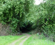 Santa_Teresa_County_Park_10.jpg
