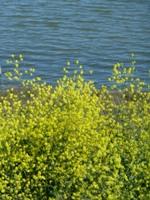 Shoreline_Park_20.jpg