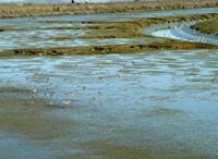 Shoreline_Park_31.jpg