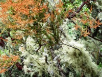 Upper_Stevens_Canyon_County_Park_12.jpg