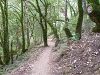 Upper_Stevens_Canyon_County_Park_3.jpg